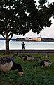 Kaivopuisto and Suomenlinna 2020.jpg