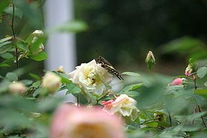 Image of Kanapaha Botanical Gardens: http://dbpedia.org/resource/Kanapaha_Botanical_Gardens