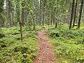 Kangasvuori nature trail 3.jpg