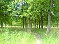 Kastryčnicki District, Mogilev, Belarus - panoramio (35).jpg