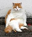 Katze 0738.jpg
