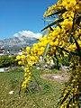 Kemer, Antalya, Turkey - panoramio (121).jpg