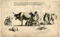 Khoikhoi Milking WDL11278.png