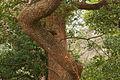 Kinugasa-yamas chipmunk 衣笠山のリス (340687359).jpg