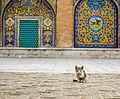 Kitten in Golestan Palace.jpg