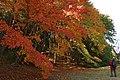 Kobe municipal forest botanical garden09s3200.jpg
