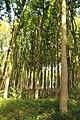 Koppenbergbos, Oudenaarde, Vlaanderen, België 07.jpg