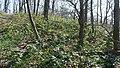 Korina 2019-03-30 Mahonia aquifolium 2.jpg