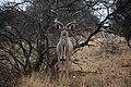 Kruger National Park, South Africa (36806796681).jpg