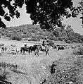 Kudde runderen met een herder te paard in een heuvelachtig en boomrijk landschap, Bestanddeelnr 255-4631.jpg
