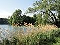Lac du Parc de la Tête d'Or - DSC05259.jpg