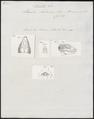 Lacerta lalandii - kop - 1700-1880 - Print - Iconographia Zoologica - Special Collections University of Amsterdam - UBA01 IZ12400071.tif