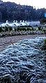 Lago Negro - Gramado - panoramio (17).jpg