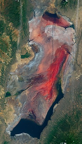 Lake Natron (Tanzania) – 2017-03-06 (very early in rainy season) – satellite image (cropped).jpg