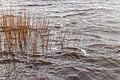 Langweerderwielen-Langwarder Wielen. Harde wind, regen, hagel en natte sneeuw op 22-02-2020. (d.j.b) 17.jpg