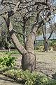 Le Jardin botanique de Palerme (6895274380).jpg