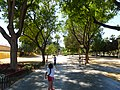 Le jardin du malecon - panoramio (4).jpg