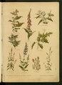 """Leclerc Du Sablon, Mathieu (1859-1944), """" Nos fleurs, plantes utiles et nuisibles """".pdf"""