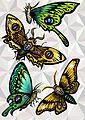 Lepidópteras - Carola Javiera Sandoval Goubet.jpg