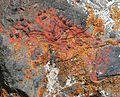 Lichens - Flickr - S. Rae (1).jpg