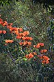Liliʻuokalani Park and Gardens (a0005150) - panoramio.jpg