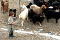Little Shepherd, Panjshir Valley, Afghanistan, 01-25-2007.jpg