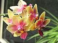 Little orchid D1205b.jpg