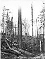 Loggers in the woods with felled logs, camp 1, Simpson Logging Company, Mason County, ca 1924 (KINSEY 1702).jpg