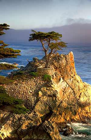 Pebble Beach, California - The Lone Cypress, a natural icon of the community, as seen by residents and more often tourists from 17-Mile Drive