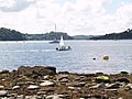 Looking across the Helford River - geograph.org.uk - 459503.jpg