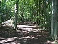 Low Scrubs Woods - geograph.org.uk - 46781.jpg