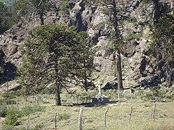Lago Pulmarí - Wikiwand