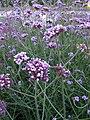 Lund Botanical Garden 4.jpg