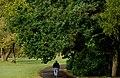 Lurgan Park (4) - geograph.org.uk - 1529250.jpg