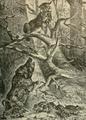 Lynxandboar.png