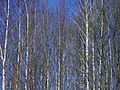 Lyovintsy, Kirovskaya oblast', Russia, 612079 - panoramio (96).jpg