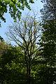 MOs810, WG 2014 20, OChK Glisnica (Dabrowa kolo Biadek Krotoszynskich natural reserved) (5).JPG