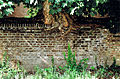 Maastricht 2007 01 Tree grown into wall at Misericordestraat Maastricht.jpg