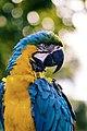 Macaw parrot (Unsplash).jpg