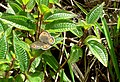 Madagascar. i.d help please - Flickr - gailhampshire.jpg