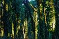 Magic forest (3035224978).jpg