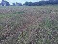 Maize farm chemical spreading.jpg