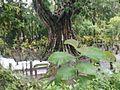 Makam Kuno Dusun Gumingsir.jpg