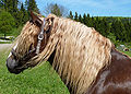 Marbach Schwarzwälder Kopf Profil.jpg
