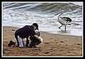 Margate Pelican Rescue- Hammy-10 (6807944140).jpg
