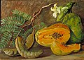 Marianne North Foliage and Fruit of the Tamarind and Flowers and Fruit of the Papaw in Java.jpg