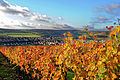 Markelsheim beliebter Wein- un Erholungsort. Goldener Oktober.jpg