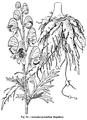 Medicinal Herbs Poisonous Plants-068-29.png