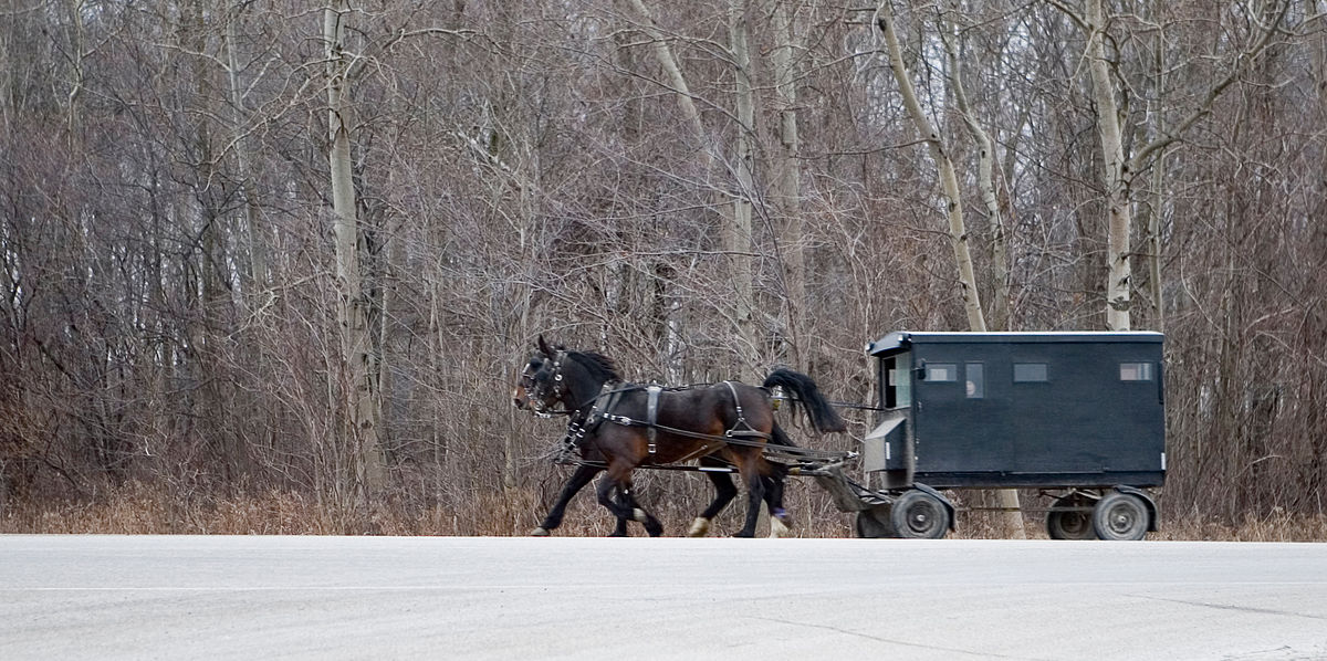 Mennonite carriage (cropped).jpg
