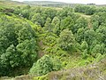 Middle Clough, Meltham - geograph.org.uk - 1339779.jpg